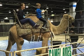 Camel Rides & Animal Encounter Session - Travel Shows
